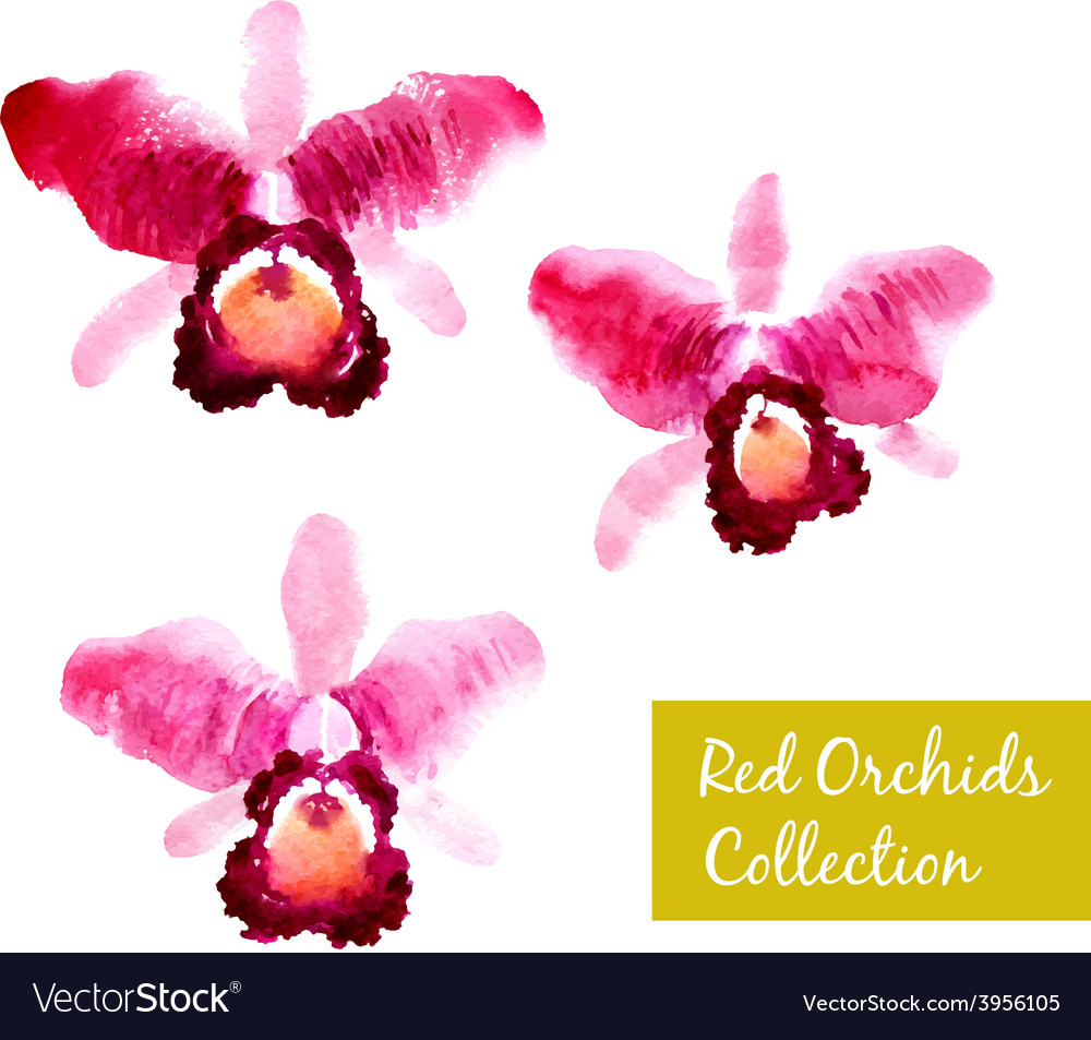 Collection of red watercolor orchids
