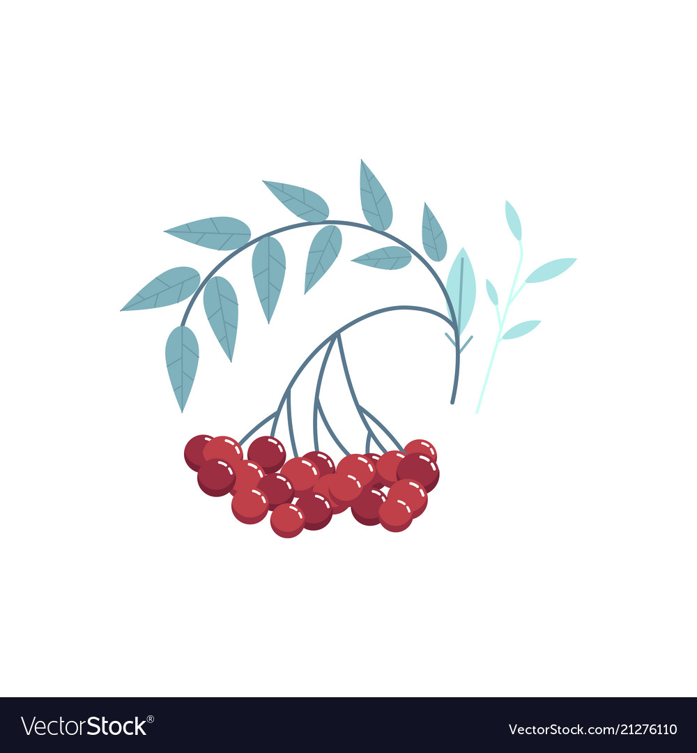 Cranberry branch with red berries leaves