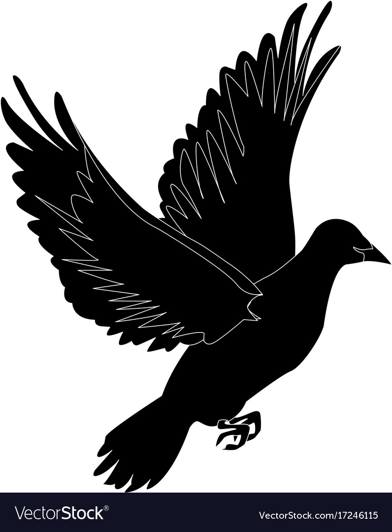 Flying Dove On White Background As Symbol Of Peace