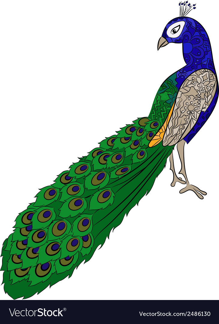 Hand Drawing Peacock Royalty Free Vector Image