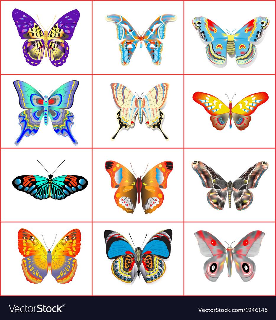 Set of summer butterflies