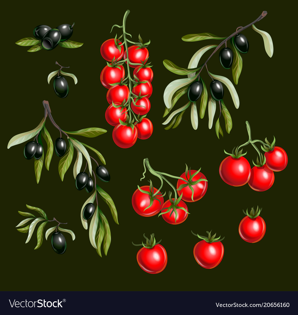 Black olives branches and cherry tomato isolated