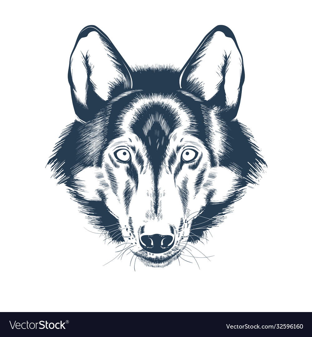 Portrait wolf head on white background