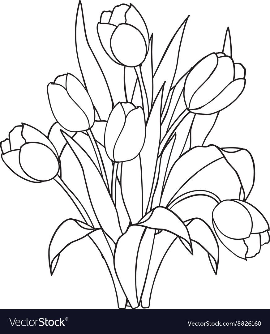Tulips flowers ornamental black and white