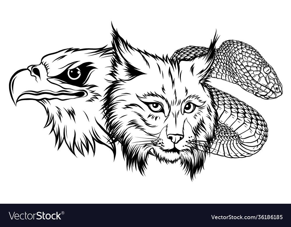 Lynx wildcat eagle snake logo mascot