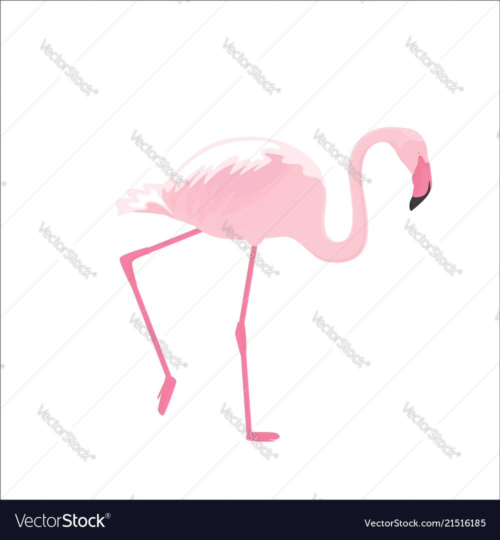 Pink flamingo stands on thin legs on a white