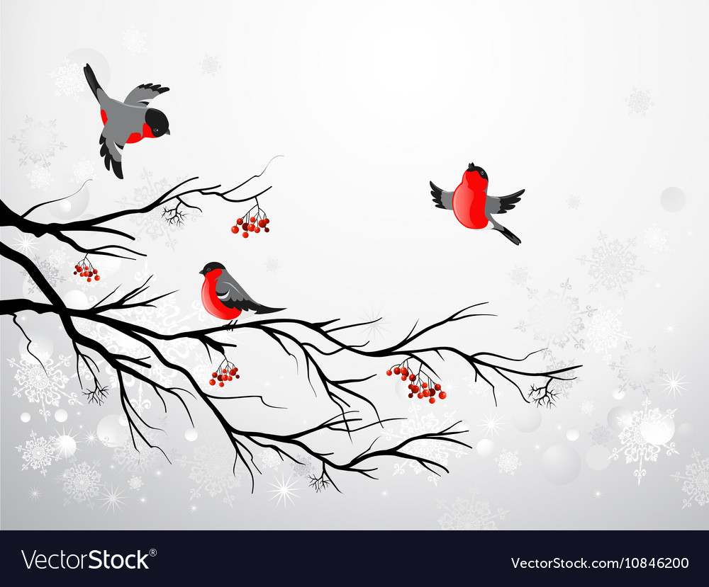 Branch and birds bullfinch