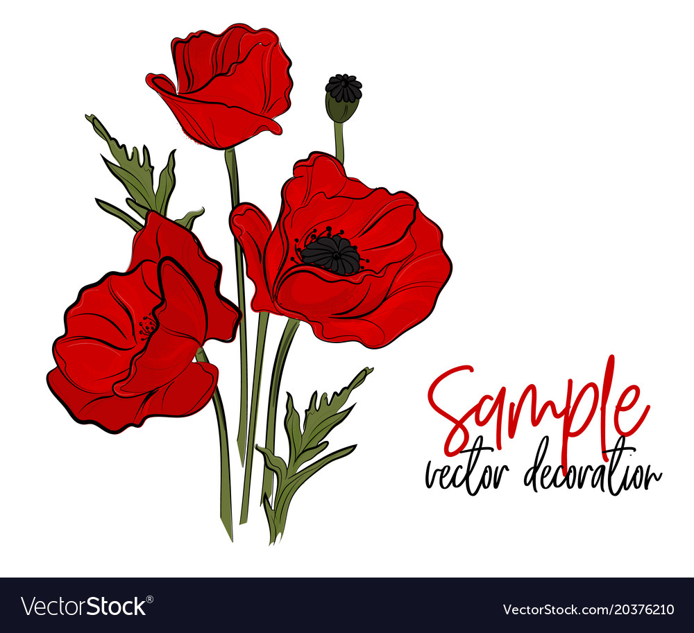 Red poppies flowers bloom symbol of spring vector image mightylinksfo