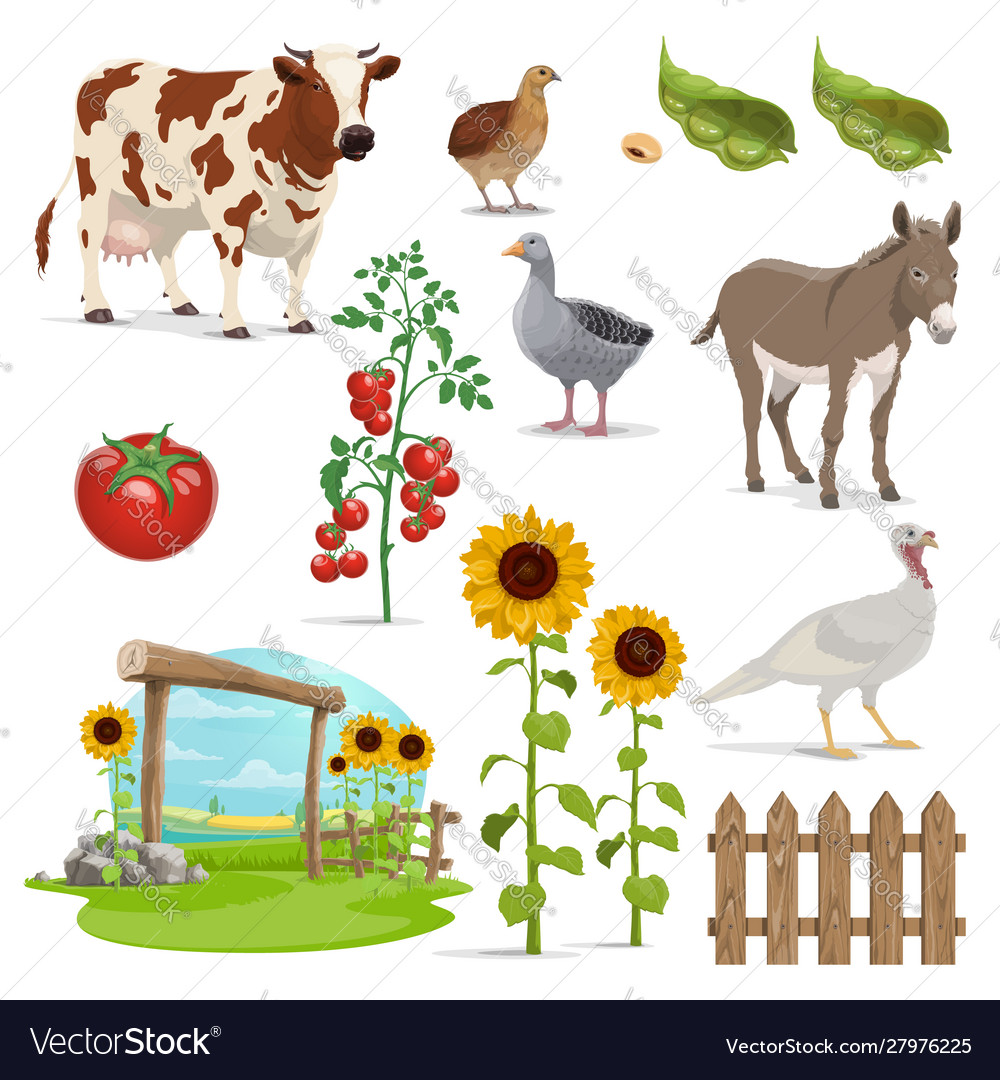 Farm field animals and vegetables agriculture