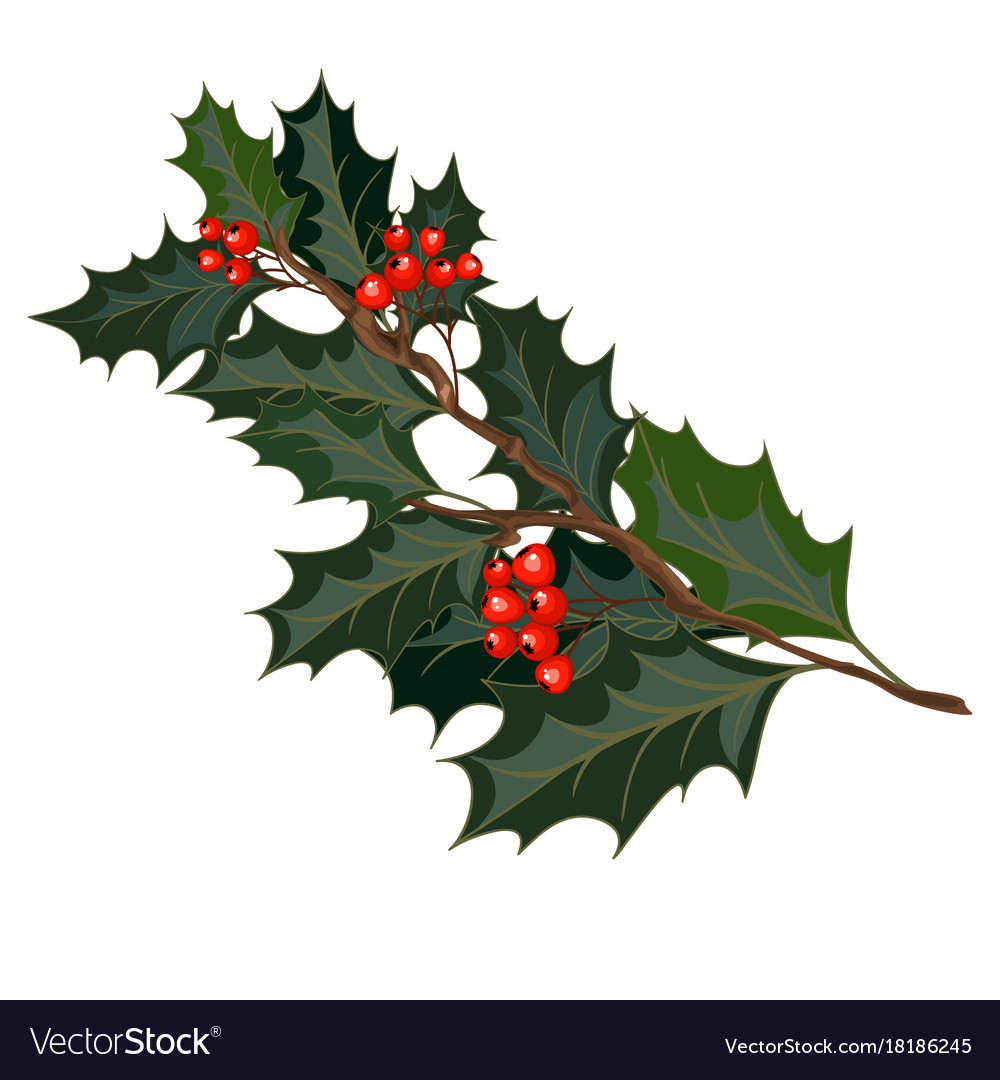 christmas decorations with holly and red berries vector image - Christmas Holly Decorations