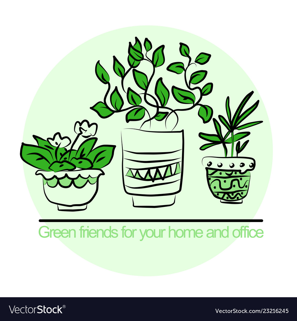 Cute pots with blloming housplants