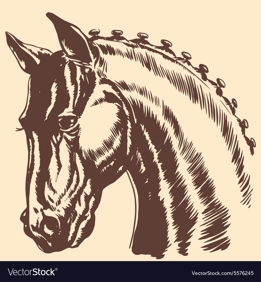 Thoroughbred horse head profile racing exhibition