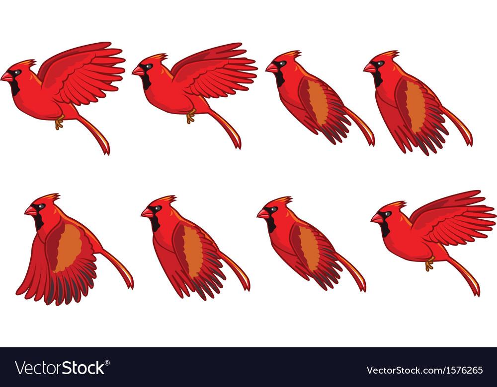 Cardinal Bird Flying Animation Royalty Free Vector Image