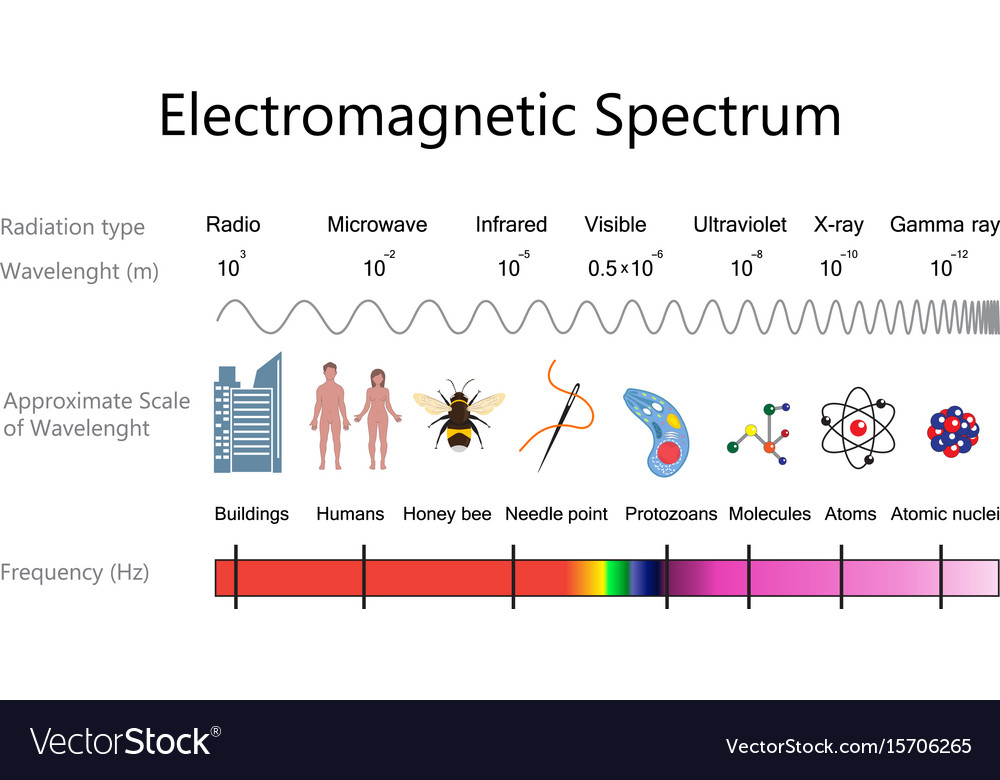 electromagnetic spectrum diagram royalty free vector image
