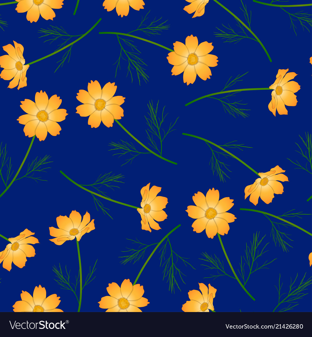 Orange Yellow Cosmos Flower On Navy Blue Vector Image