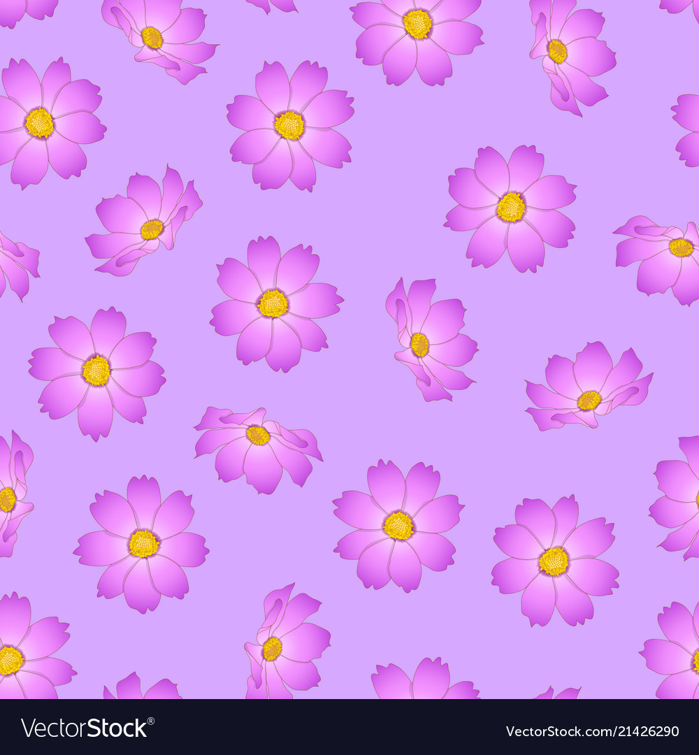 Pink Cosmos Flower On Violet Background Royalty Free Vector