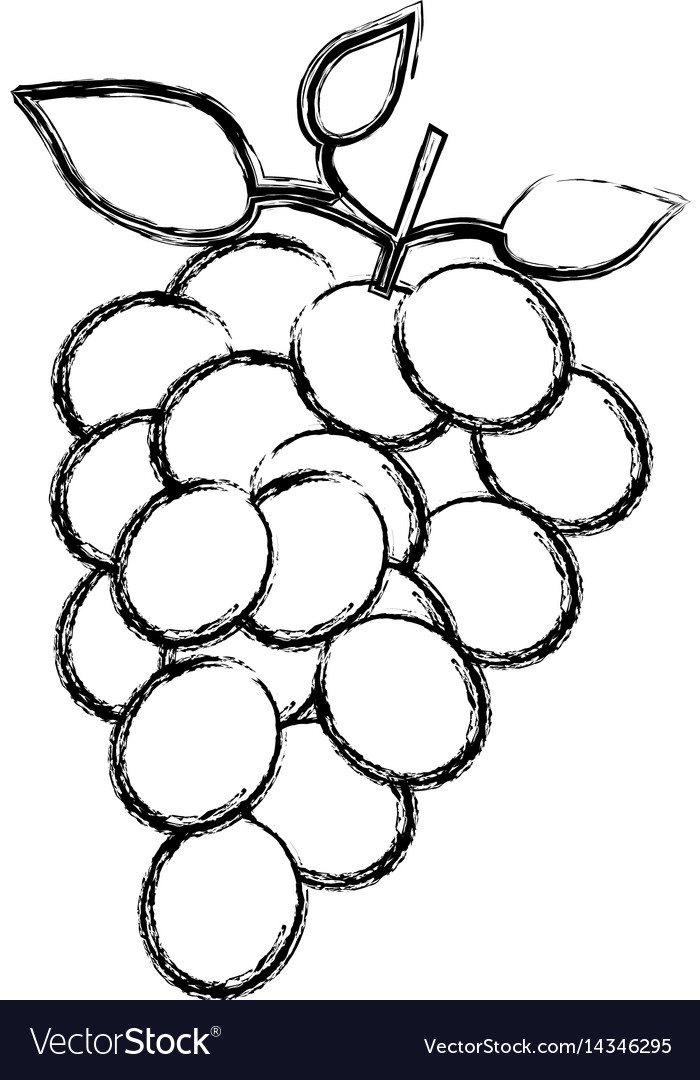 Monochrome Sketch Silhouette Of Bunch Of Grapes Vector Image