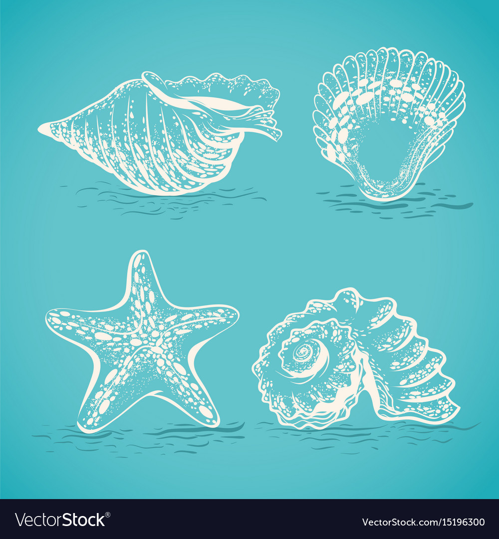 Sketch drawing by hand of different seashells and