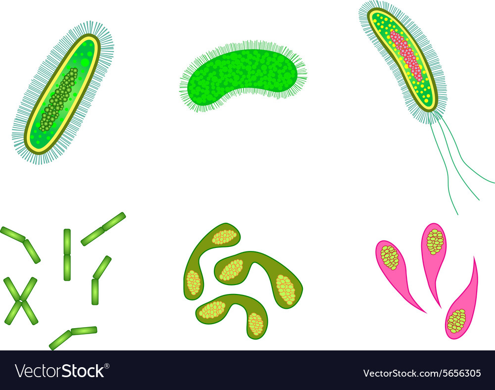 Bacteria and virus cells isolated vector image