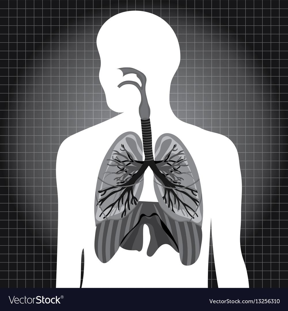 Human system respiratory