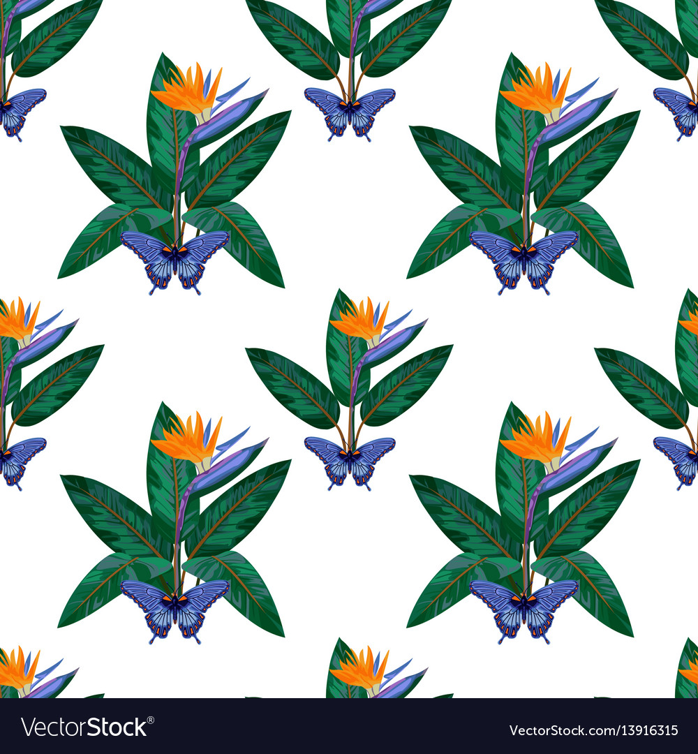 Strelitzia and butterfly seamless pattern vector image