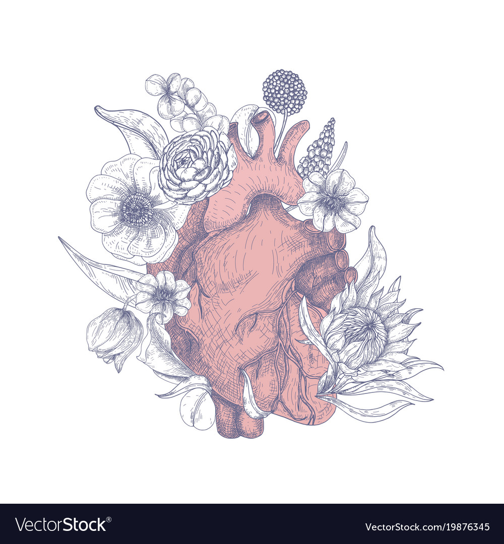 Gorgeous Anatomical Heart Surrounded By Beautiful Vector Image