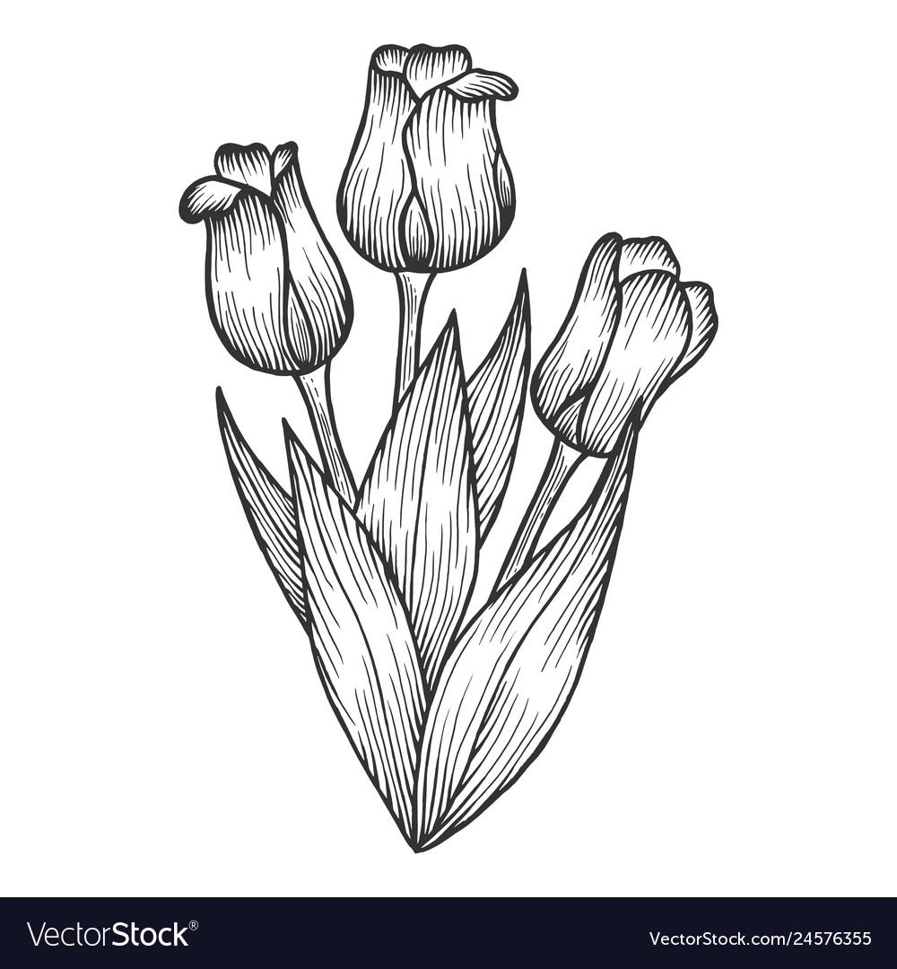 Tulip flowers sketch engraving Royalty Free Vector Image