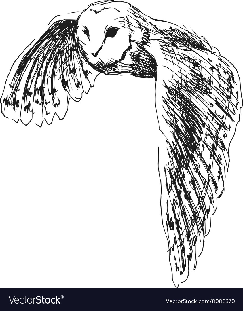 Hand sketch flying owl vector image