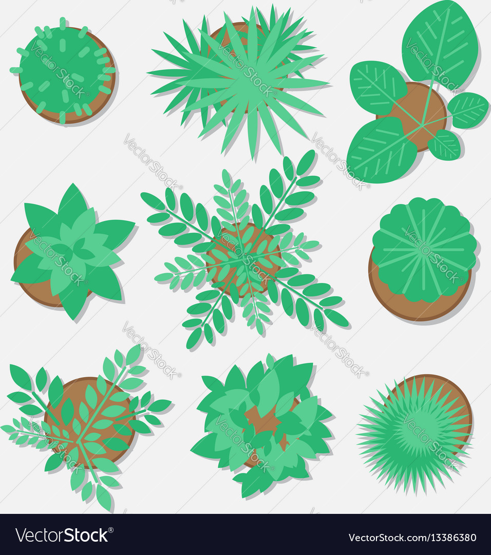 Collection of plants for web design flat style