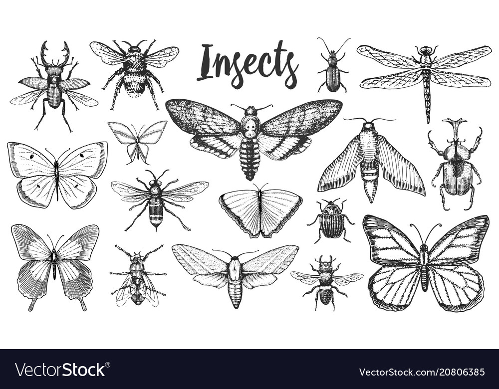 Different insects set butterfly and dragonfly