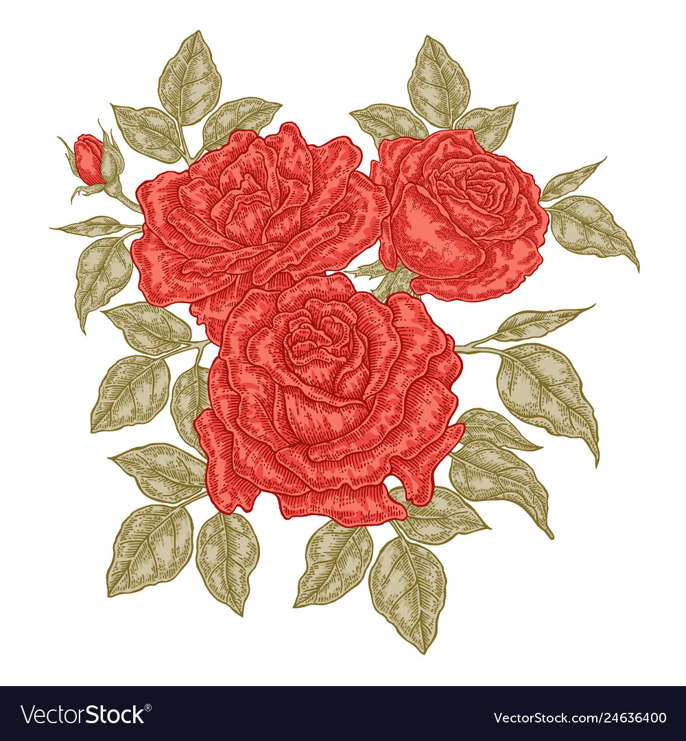 Hand drawn red roses flowers and leaves vintage