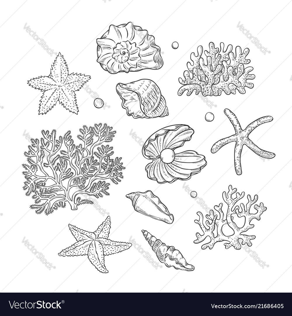 Set sea shells stars corals and pearls