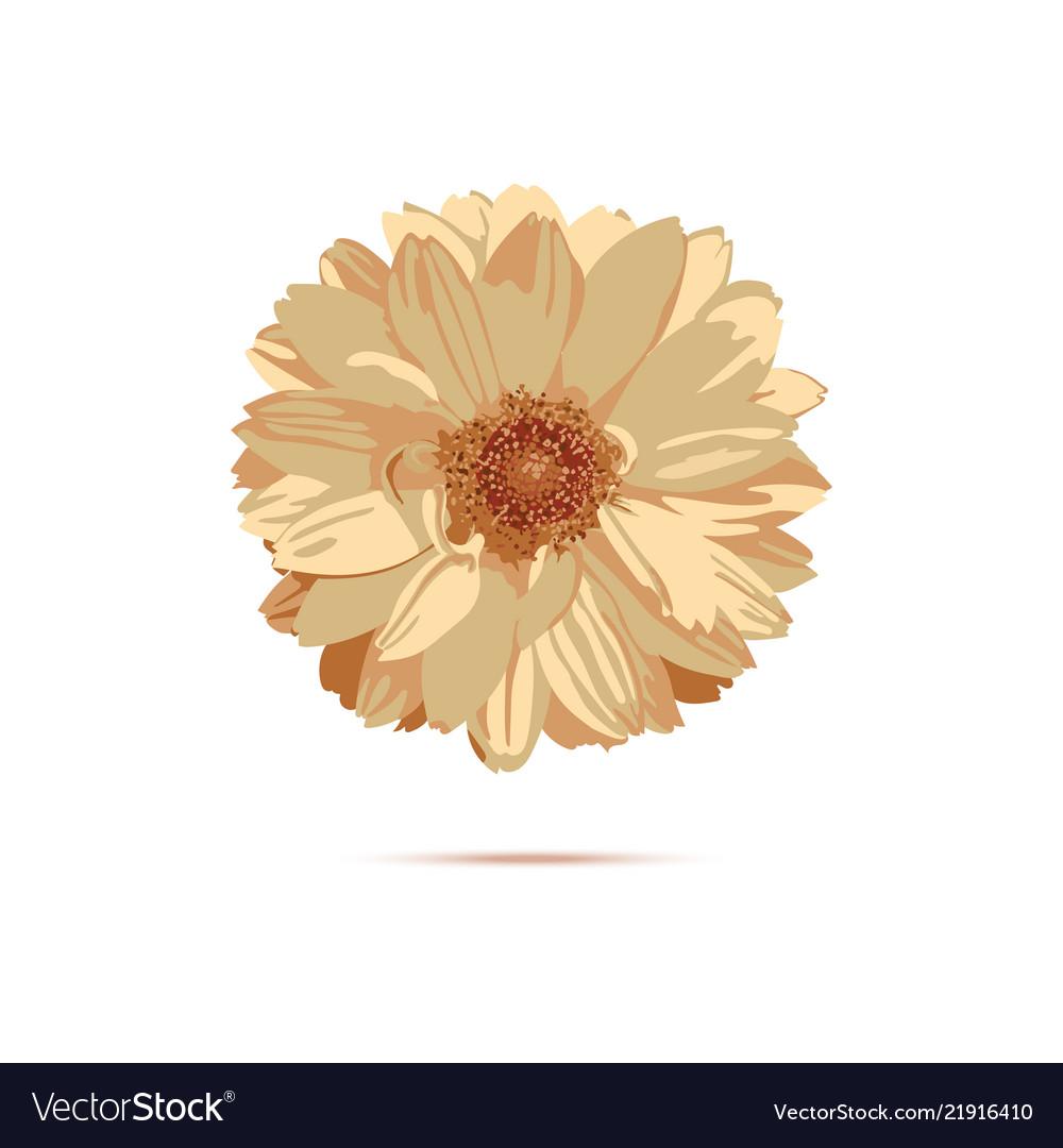 Chrysanthemum flower floral royalty free vector image chrysanthemum flower floral vector image izmirmasajfo