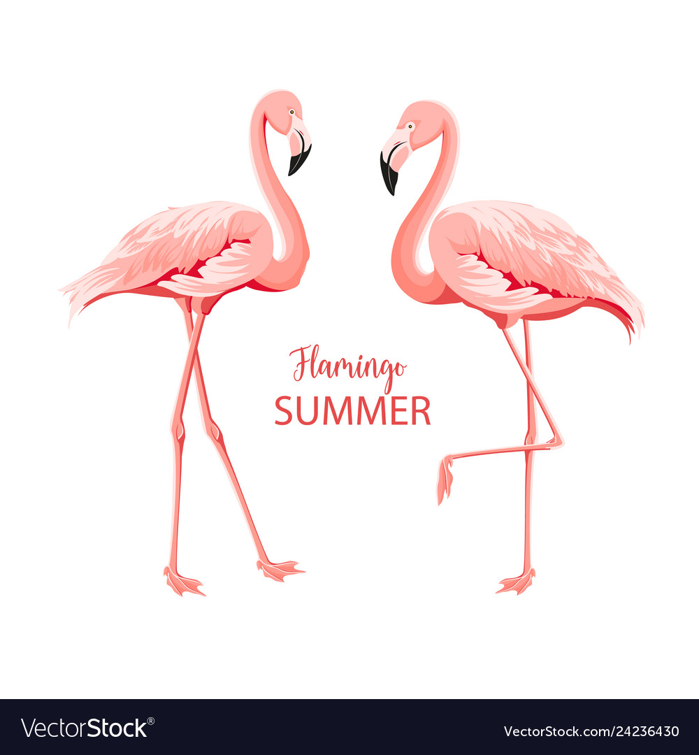 Tropical birds pink flamingos set