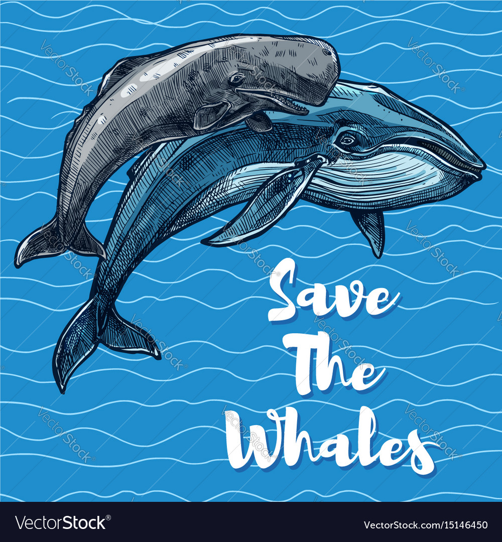 Poster for whales saving