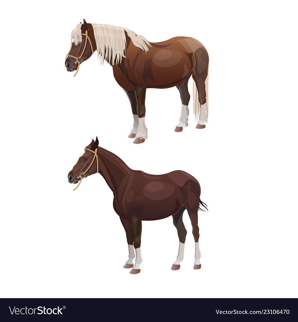 Riding And Draft Horses Royalty Free Vector Image
