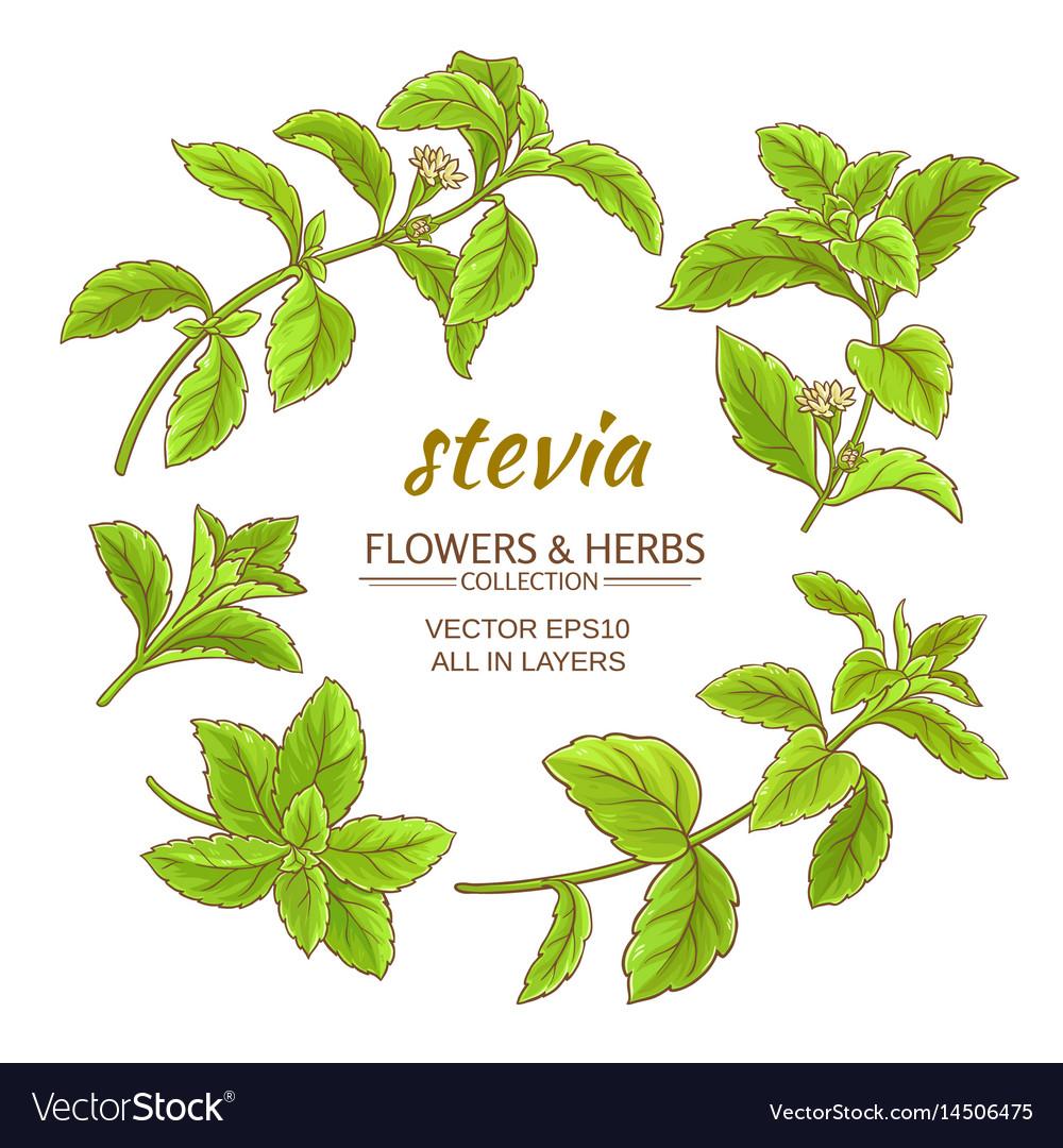 Stevia set vector image