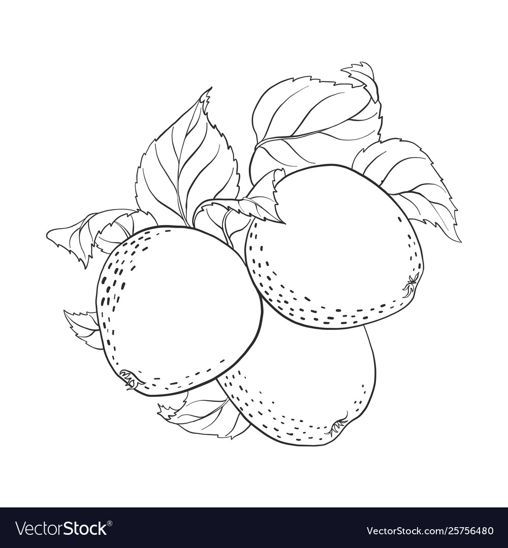 Drawing apples