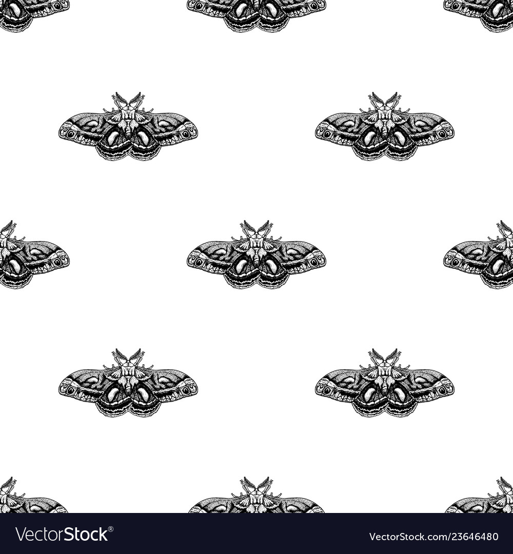 Hand drawn background with moth seamless