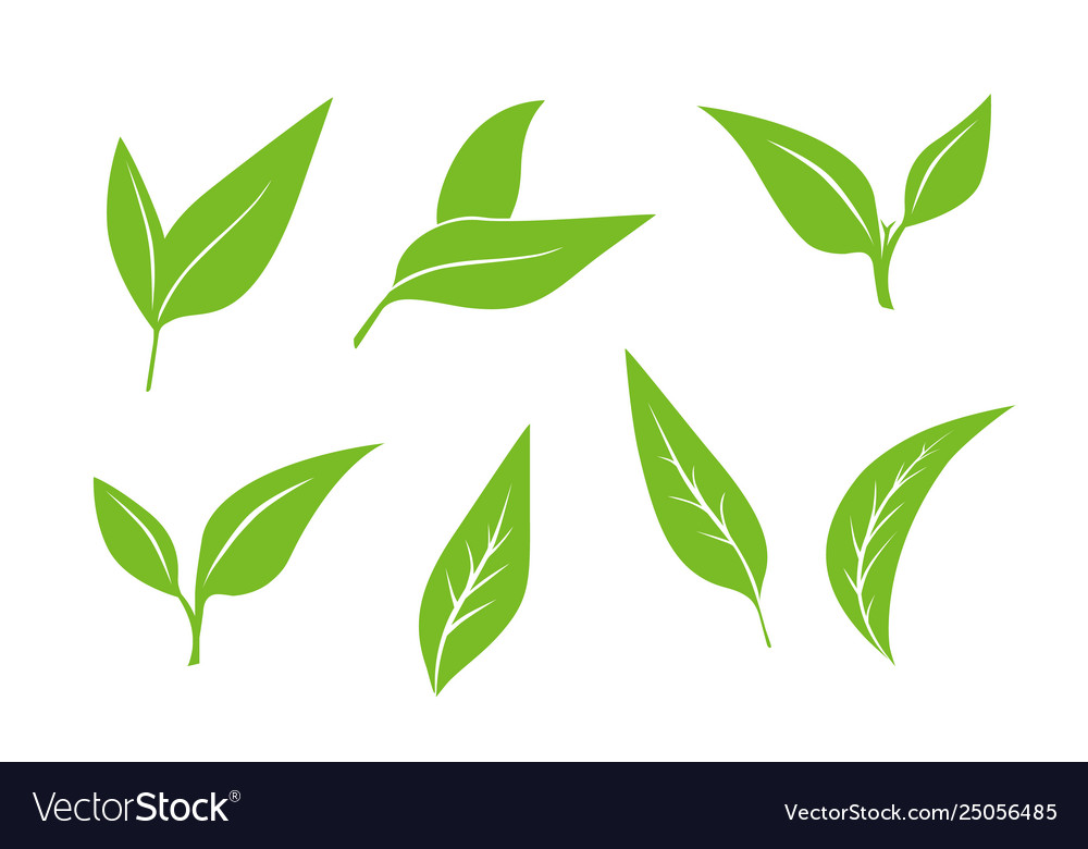Seamless Pattern With Green Tea Leaves On White Vector Image