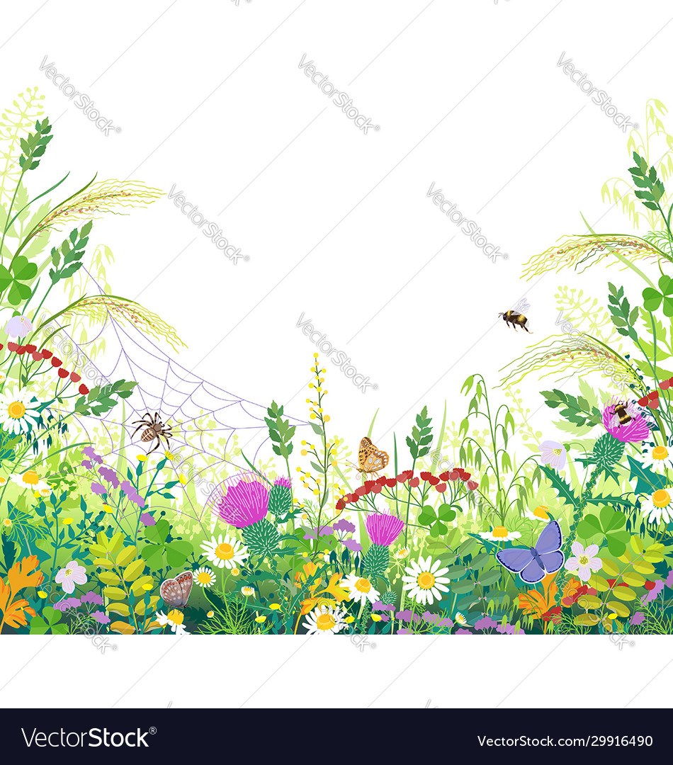 Colorful frame with summer meadow plants spider