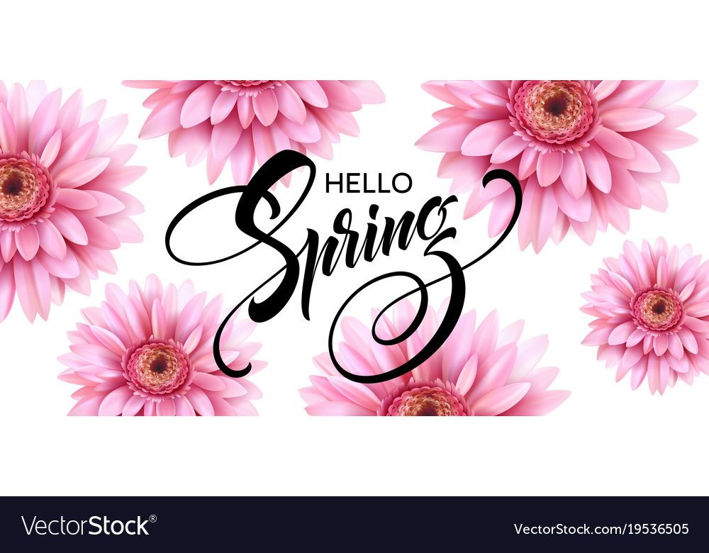 Gerbera flower background and hello spring vector image