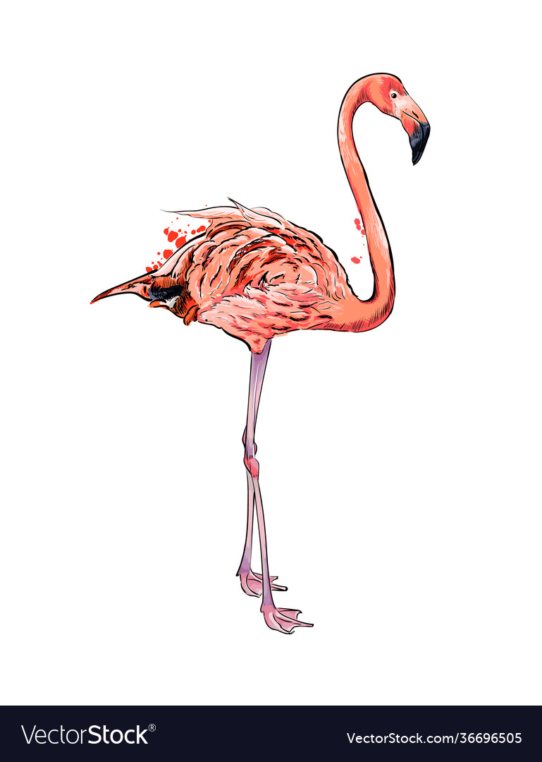 Pink flamingo from a splash watercolor colored