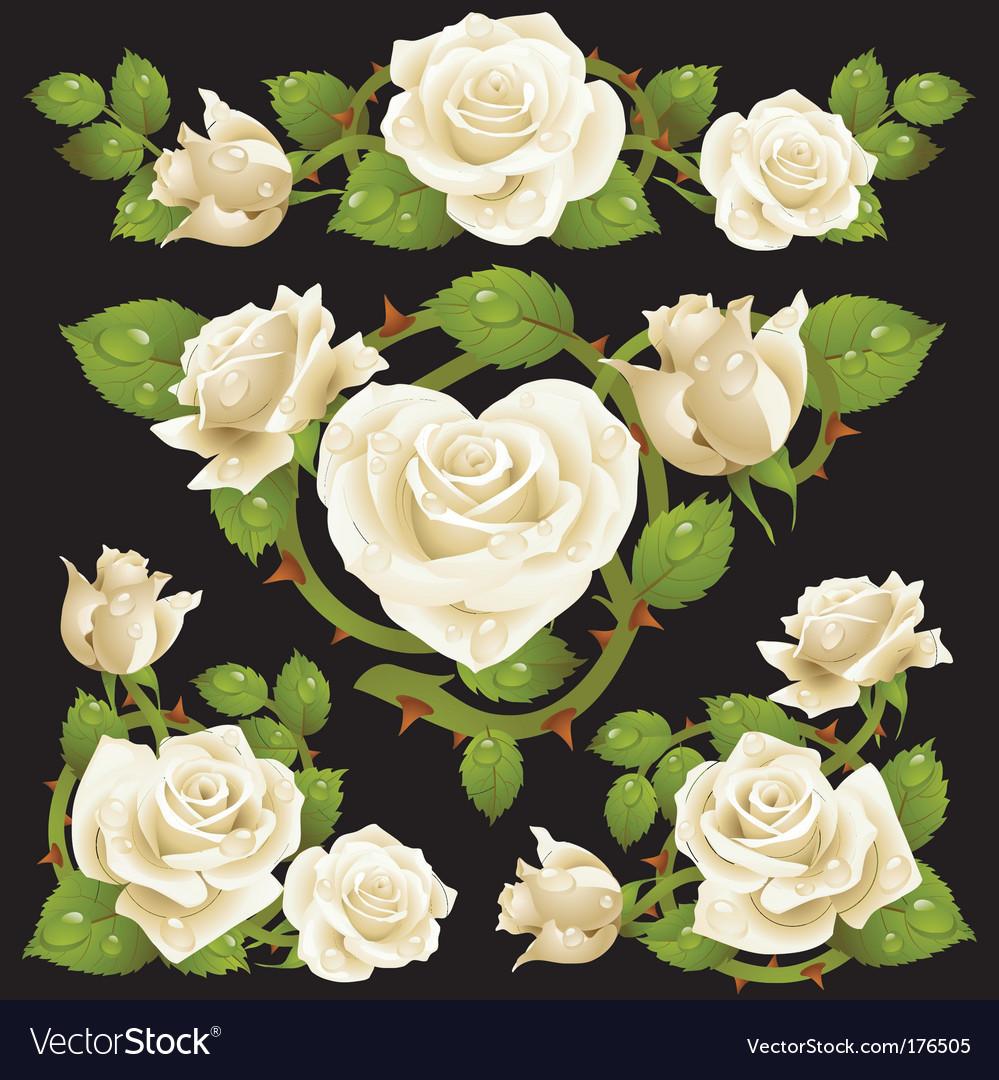 White rose design elements