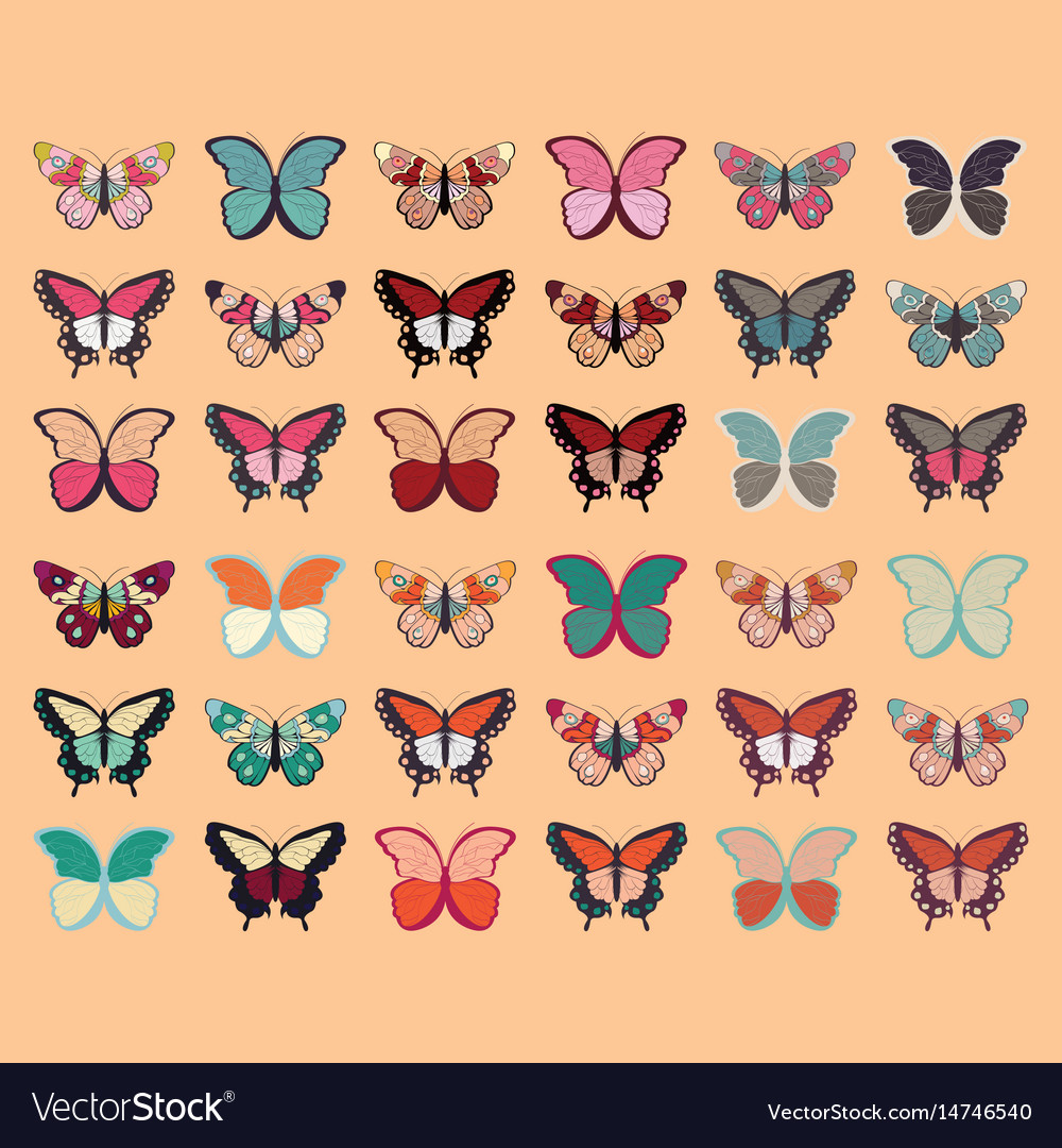 Collection of thirty six colorful butterflies