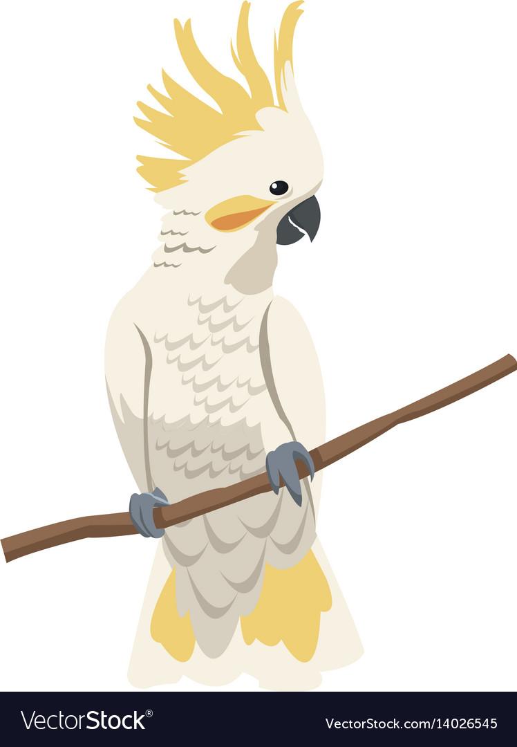 Cockatoo bird icon