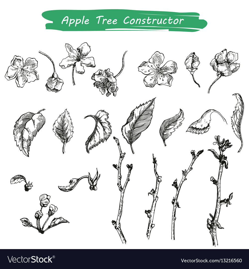 Appleflower sketch 1 vector image