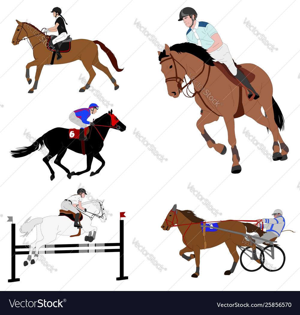 Equestrian sports dressage jump show harness