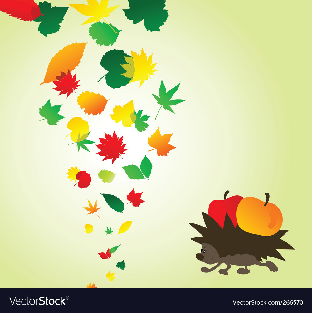 Hedgehog and leaves vector image