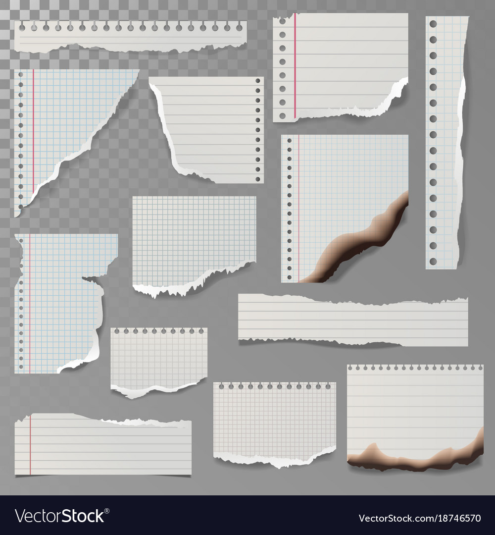 pieces of torn white lined notebook paper square vector image